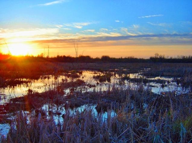 wetlands and marsh at sunset rural Ontario