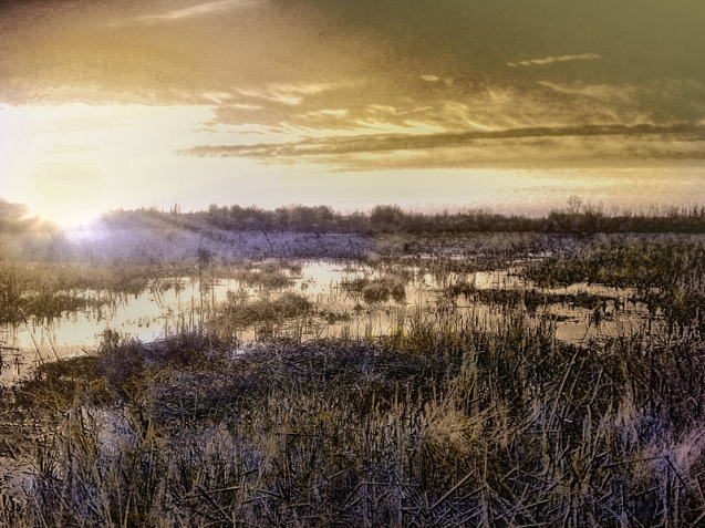 marsh wetlands in evening light